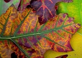 Cure those autumn blues