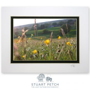 May_hay_meadow_Cowgill_Stuart_Petch
