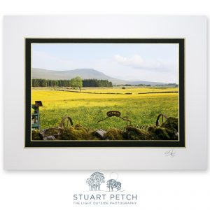 buttercup_meadows_Chapel_le_Dale_Stuart_Petch
