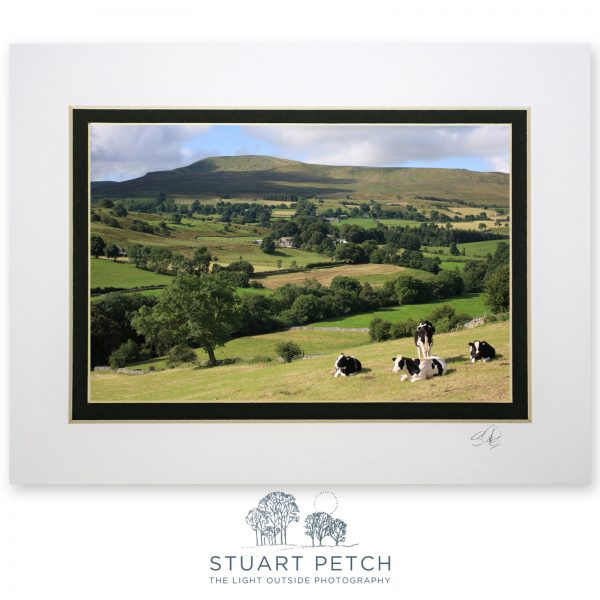 one_Dentdale_summer_Stuart_Petch